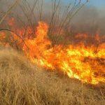 В Минской области за сутки случилось 67 пожаров сухой растительности